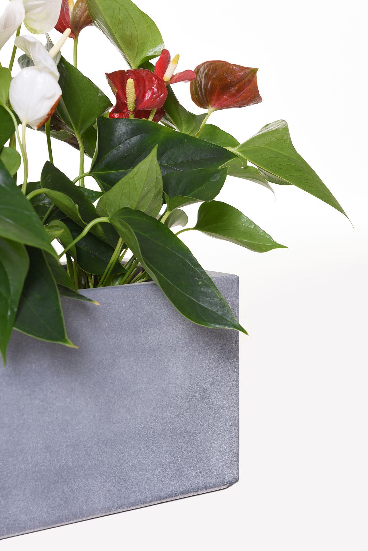 blumenkasten balkonkasten pflanzkasten aus beton flobo 60 cm grau ebay. Black Bedroom Furniture Sets. Home Design Ideas