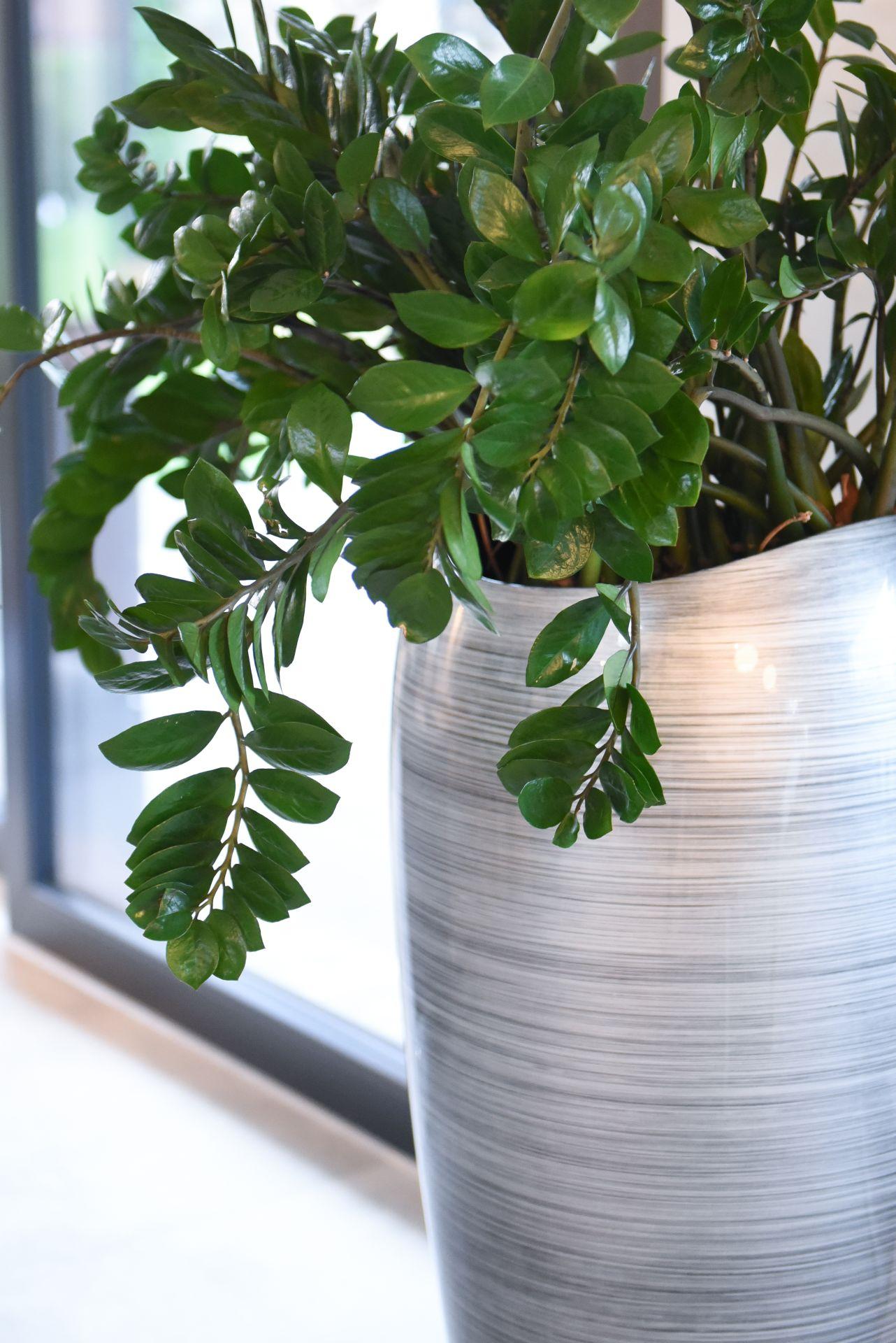 Exklusive Pflanzkübel pflanzkübel pflanzgefäß exklusiv deluxe 100 cm hoch silber schwarz