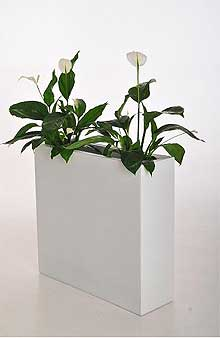 im trend auch bei pflanzk beln die farbe wei pflanzk bel blog von ae trade. Black Bedroom Furniture Sets. Home Design Ideas