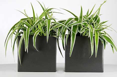 Innovativer Blumentopf mit integriertem Bewässerungssystem erspart ...