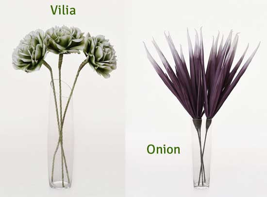 Vilia, Onion im 3er-Set