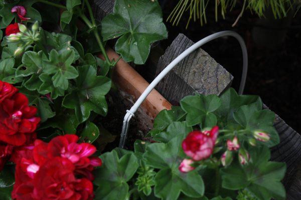 Bewässerung Blumenkasten