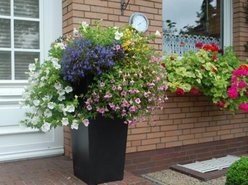 Ein buntes Veilchen-Arrangement schmückt den Fiberglas Blumenkübel Classic