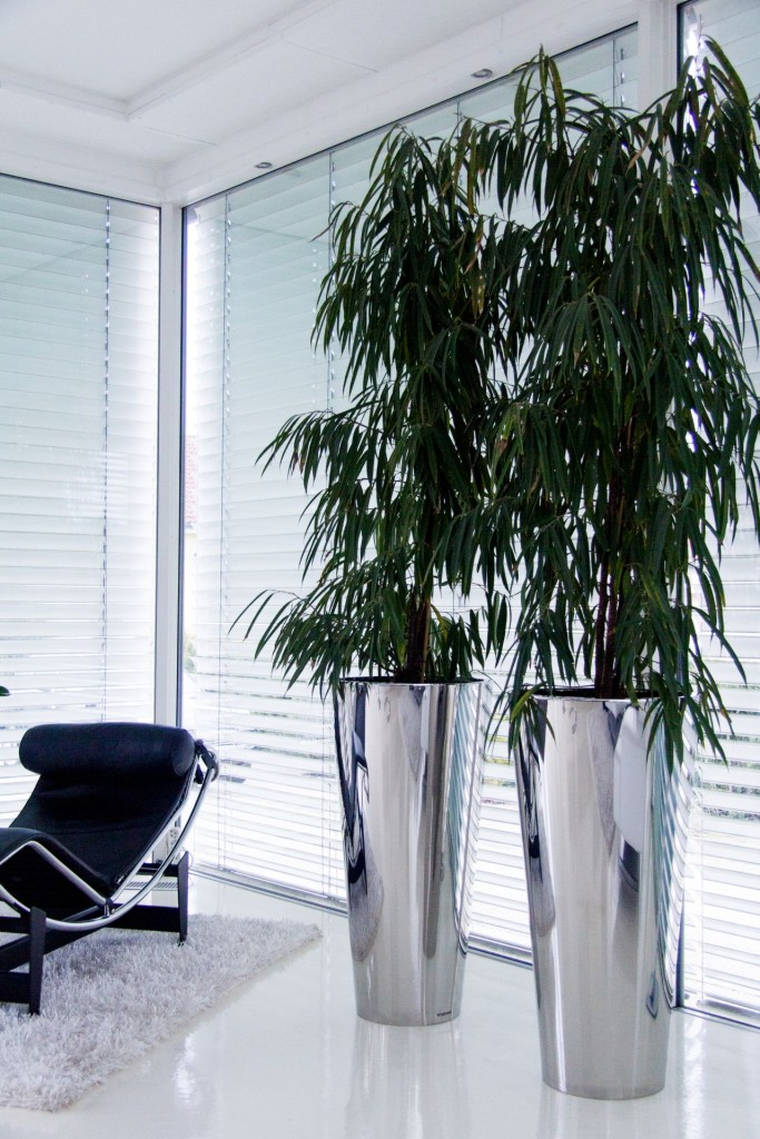 referenzkundenblog von pflanzk beln ae trade online. Black Bedroom Furniture Sets. Home Design Ideas